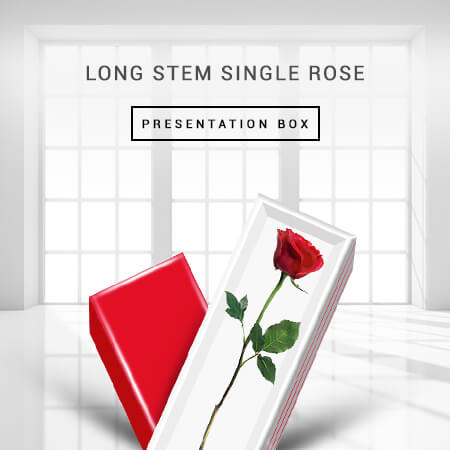 long-stem-single-rose-presentation-box