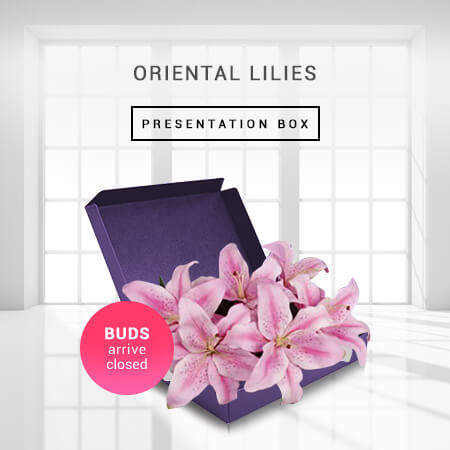 Image of Oriental Lilies -Boxed